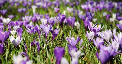 S'occuper du jardin en mars