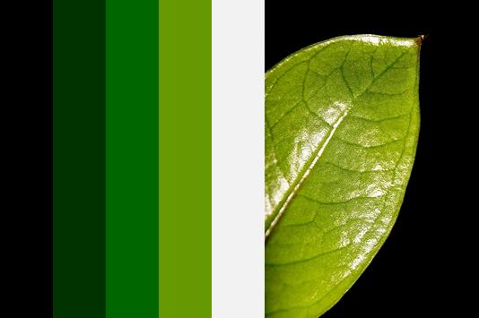 nuancier noir et vert feuille
